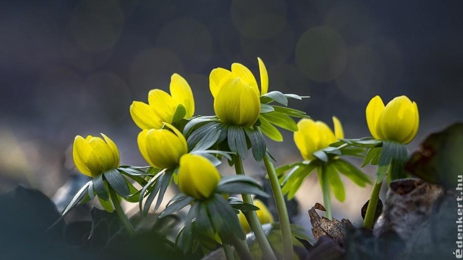 10 kedvelt tavaszi virág
