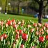 Tavaszi virágok és cserjék listája