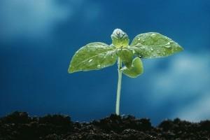 Hogyan javítsuk fel az agyagos talajt?