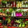 Gardenexpo 2011 - Ki a kertbe!