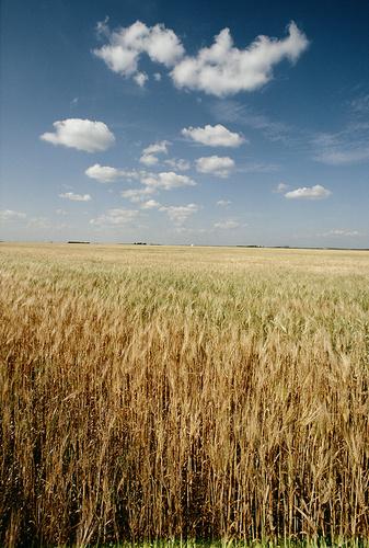agrouzemanyag-termeszetbarat