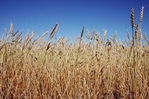 Természetbarát agroüzemanyag-előállítást!