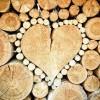 Hogyan égnek a fák? Melyiknek a legjobb a fűtőértéke?