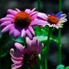 Virágok szerepe a mitológiában