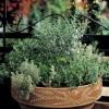 Tavaszi fűszernövények balkonládában