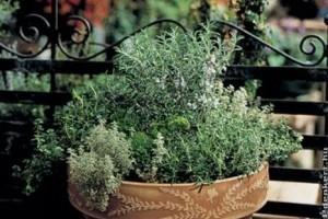 3 tavaszi fűszernövény tipp balkonládába