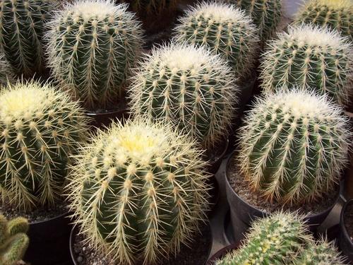kaktusz-kiallitas