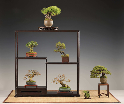 bonsai-kiallitas-corvinus