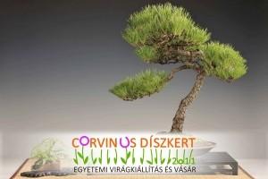 Corvinus Díszkert Egyetemi Virágkiállítás és Vásár 2011