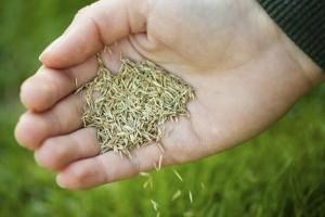 Gyepesítés fűmagvetéssel: tavasszal vagy ősszel jobb?