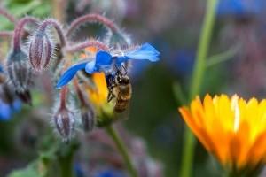 Színpompás virágoskert típusok