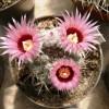 Kaktusz és pozsgásnövény kiállítás a Füvészkertben