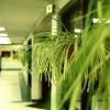 Lusta vagy elfoglalt emberek növényei