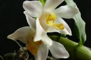 Orchideák Napja a Füvészkertben 2011