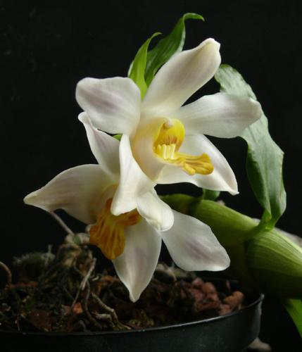orchidea-kiallitas-fuveszkert