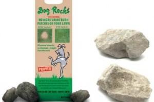 Dog Rocks kövek a gyepfoltok ellen!
