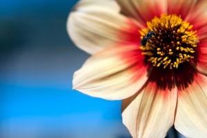 Kertészkedési tanácsok júniusra