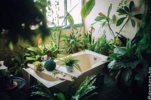 Ezeket a szobanövényeket tedd a fürdőszobába