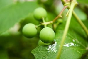 Alginure, az új generációs növénykondicionáló