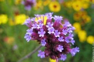 Kertészkedési tippek júliusra!