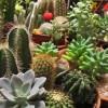 Kaktuszok havi munkanaptára - január, február