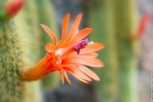 Kaktuszok havi munkanaptára - március, április