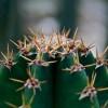 Kaktuszok havi munkanaptára - július, augusztus