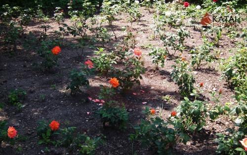 rozsak-talajtakaras
