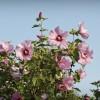 Virágzó Zugló 2011 - Szentmihályi út, Colombus és Ungvár utca