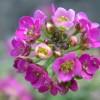 A napos, meleg, száraz hely egynyári virágai