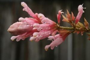 Virágzó Zugló 2011 - Ráskay Lea utca és Ond vezér útja