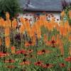 Narancssárgába öltözött kert vidám embereknek