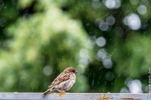 Miért hasznosítsuk az esővizet?