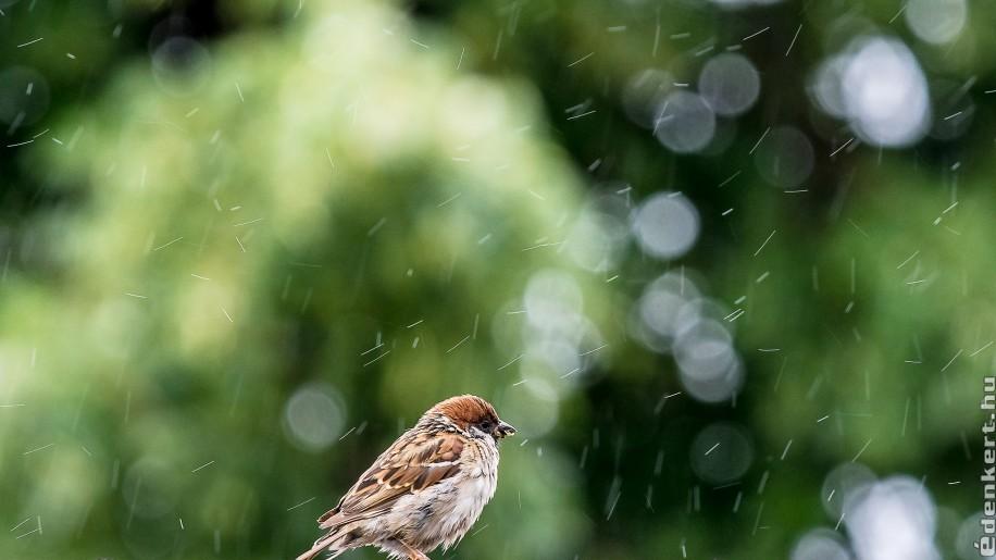 7 indok, miért hasznosítsuk az esővizet!