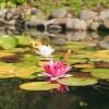 5 jótanács a kerti tó építéséhez