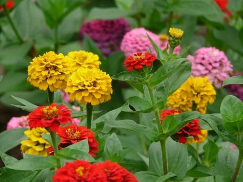 flowers-59912_1280