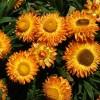 Virágzó Zugló 2011 - Bácskai utca 53-61