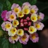 Virágzó Zugló 2011 - Vezér utca 131 (Repetetanya Étterem)