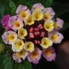 Virágzó Zugló 2011 - Szatmár utca 63/b