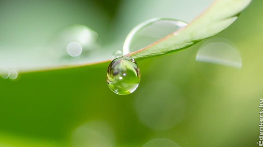 Az esővíz szűrésének fortélyai