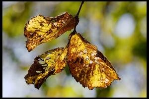 Meleg ősz és csapadékszegény tél várható