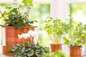 Elsősegély a kiszáradt növényeknek