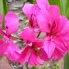 Mediterrán növények ápolása röviden és tömören - 1. rész