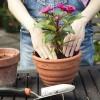 Időszerű a szobanövények átültetése