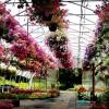 5 tipp az évelő növények kiválasztására