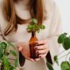 Hogyan fiatalítsuk meg szobanövényeinket?