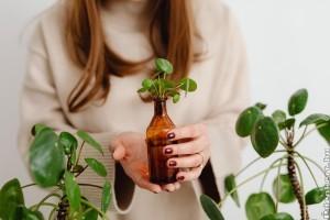 Tavasszal így fiatalíthatod meg szobanövényeidet