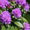 Kora tavasszal így gondozd az örökzöldjeidet a kertben