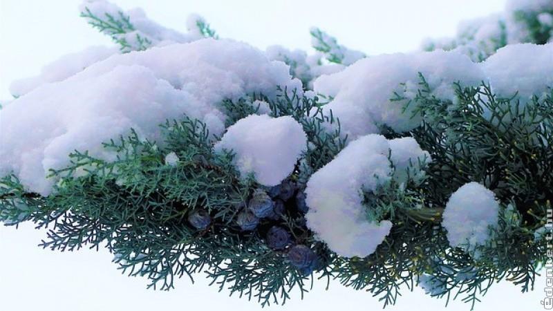 Örökzöldek havi munkanaptára - november, december
