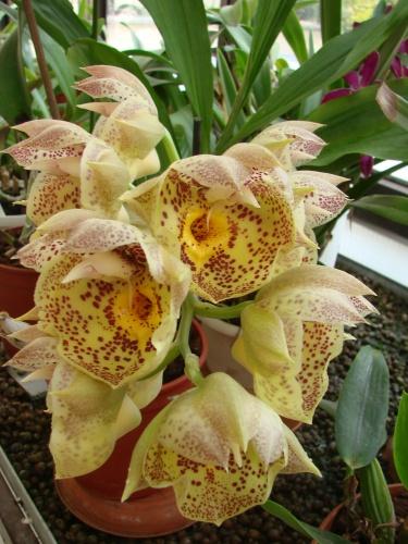 orchidea-kiallitas-2011
